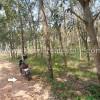 Chenkottukonam real estate residential land for sale Chenkottukonam properties