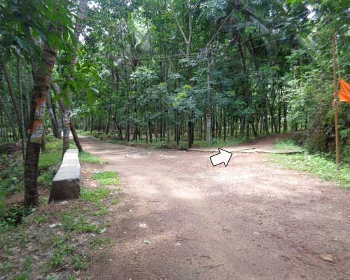 Aryanad Properties Above 2 Acres of Rubber Plantation Land for Sale at Aryanad Trivandrum Kerala