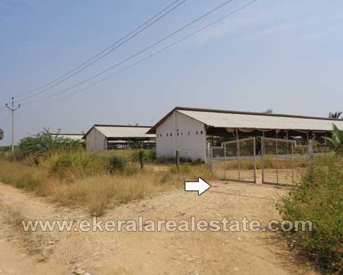 Tamil Nadu Properties Farm Land for Sale in Tirunelveli District Tamil Nadu Land Sale at Tirunelveli
