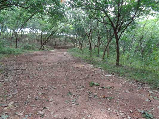 kerala real estate trivandrum pothencode rubber estate land  sale trivandrum properties