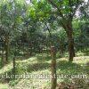 kerala real estate properties Neyyattinkara land sale in Perumkadavila