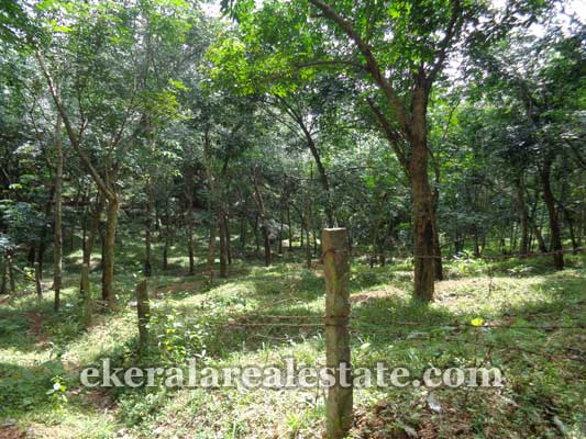 kerala real estate properties Neyyattinkara land sale in Perumkadavila