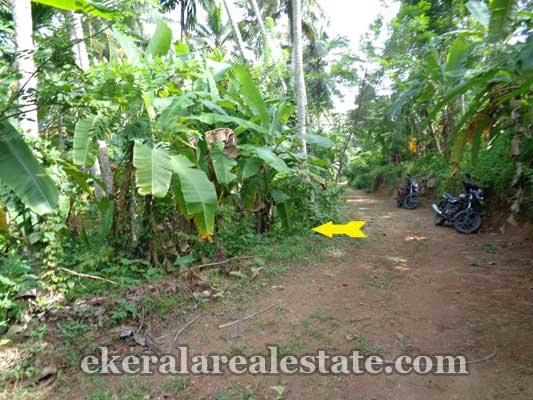 Kuttiyani Vattappara trivandrum land property for sale kerala real es