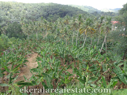 Karakulam real estate land for sale in Mullassery Karakulam properties