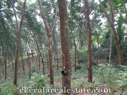 Land for sale at vithura trivandrum kerala real estate for Land for sale in kerala