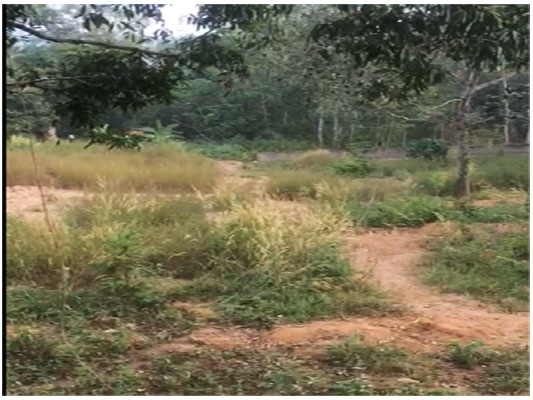 residential house plot for sale Peyad Adjacent to Skyline park Villas Trivandrum kerala real estate properties trivandrum Peyad Adjacent to Skyline park Villas Trivandrum