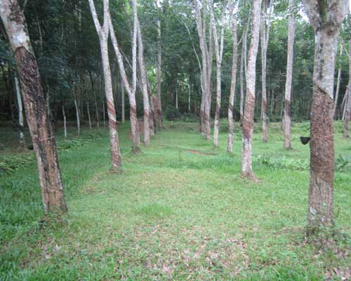 47 cent land plot for sale at Neduvathoor Kottarakkara Kollam Kerala real estate Neduvathoor Kottarakkara Kollam Kerala
