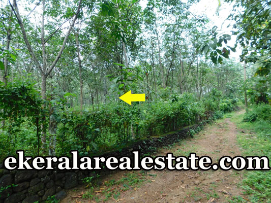 1.20 Acre  Rubber Land Sale at Alamcode Nedumangad